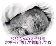ジジさんのオチリ2.jpg