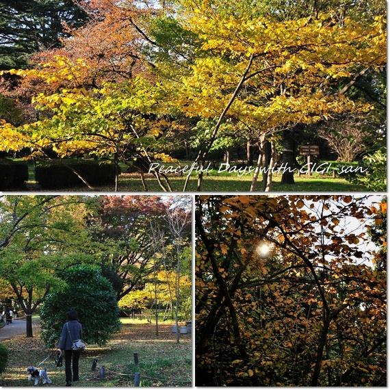 04ジジさんのお庭.jpg